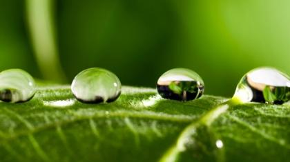raindrop (c) shutterstock_78796945 .jpg