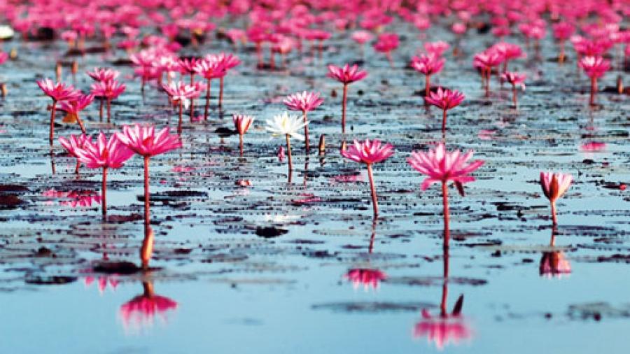 watkins-lotus