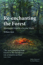 re-enchanting-the-forest