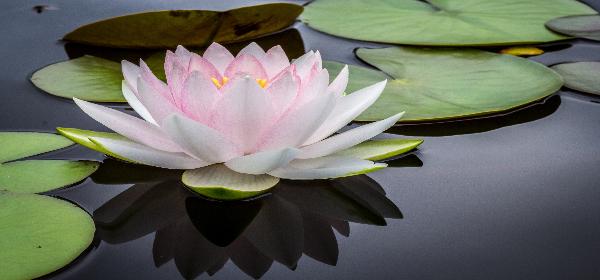 Spiritual Regression for Peace & Healing